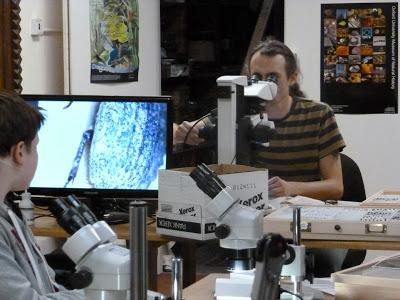 Coleoptera, beetles, identification, course, Scarabaeidae, characters, morphology