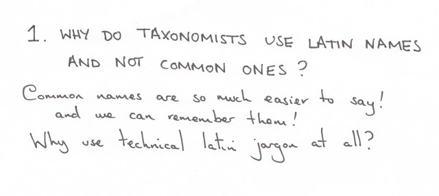 taxonomy, classification, systematics, cartoon, latin, binomial