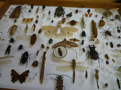 entomology, orders, insects, soritng, volunteering, OUMNH